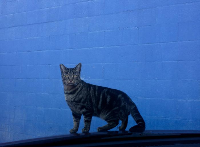cat_on_hood-1